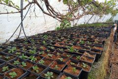 We have 2 polytunnels so we can grow in almost any weather.