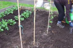 Veg Beds at Whitefield Community Fire Station 3
